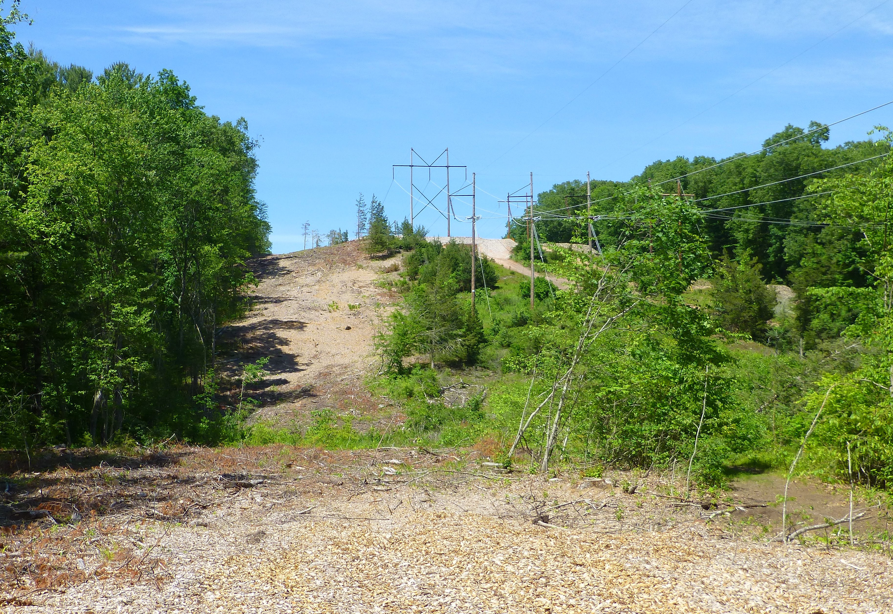 power line after tree cutting 2017