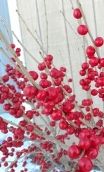 winterberry closeup