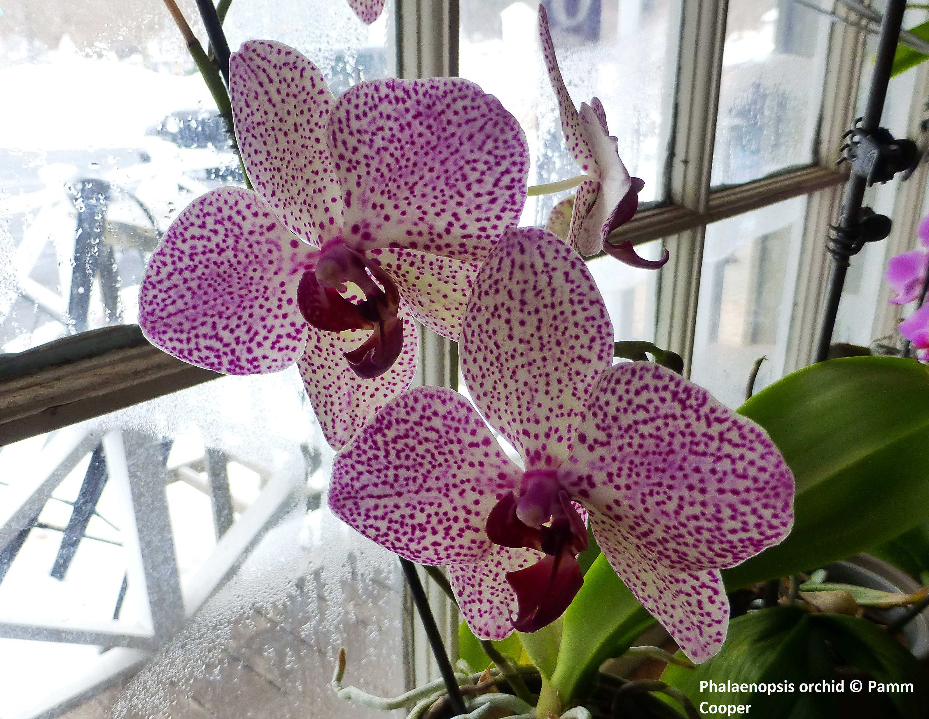 orchids in January