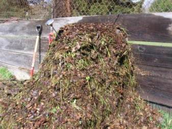 compost pile 1