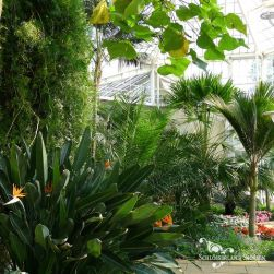 Pillnitz Palace greenhouse interior