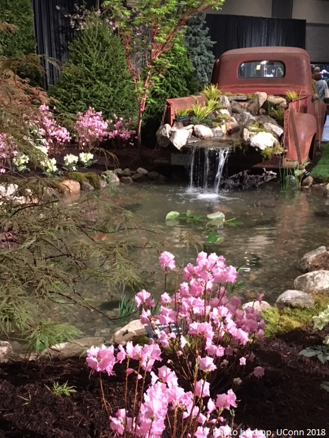 Ct Flower Garden Show Uconnladybug S Blog