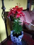 Orange Asiatic lily3