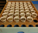 2. Sifted soils
