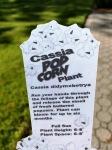 Popcorn plant label,Quish