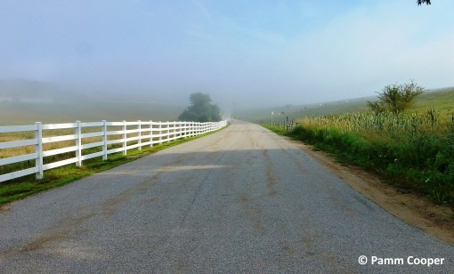 Horsebarn Hill on a foggy July morning