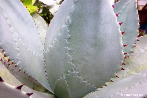 pattern on agave leaves