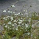 QAL_Plant-150×150