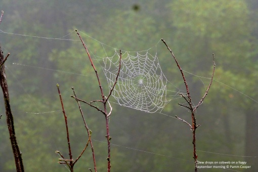 spider web on a foggy September morning 2017 Pamm Cooper photo II