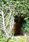 10b ficus microcarpus