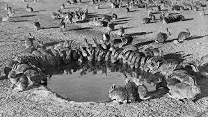 5 Rabbits Australian National University