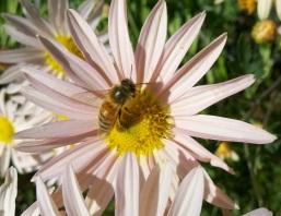 9 honey bee