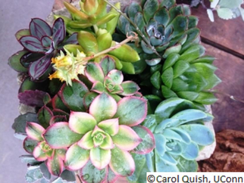 container-gardening_14_520914843