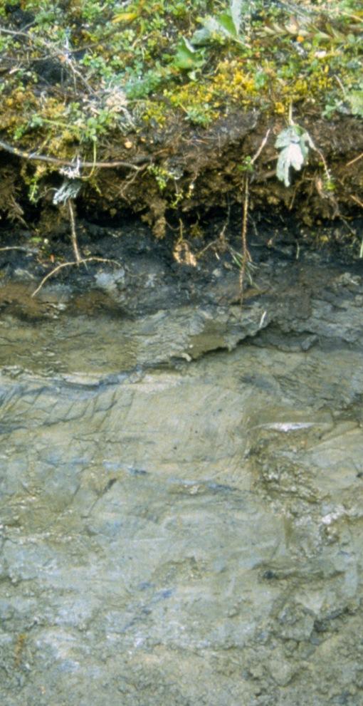 gelisols soil stelprdb1237732