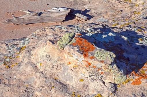 lichen colorful crust www.nps.gov