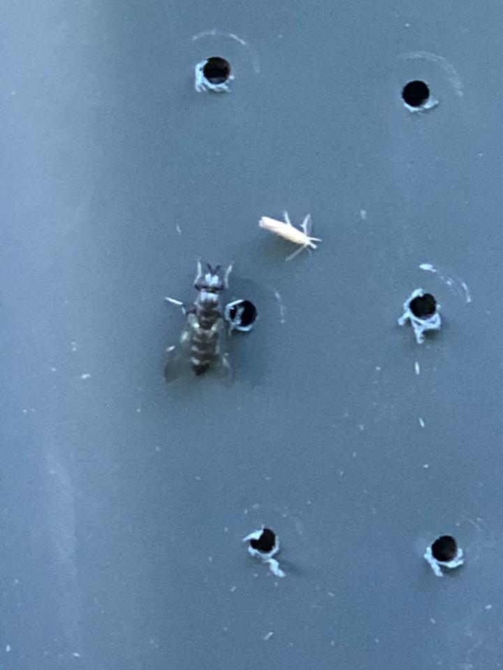 Adult fly on storage bin, image by Luke Pelton.jpeg