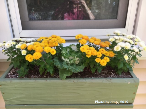 mums in window box 2