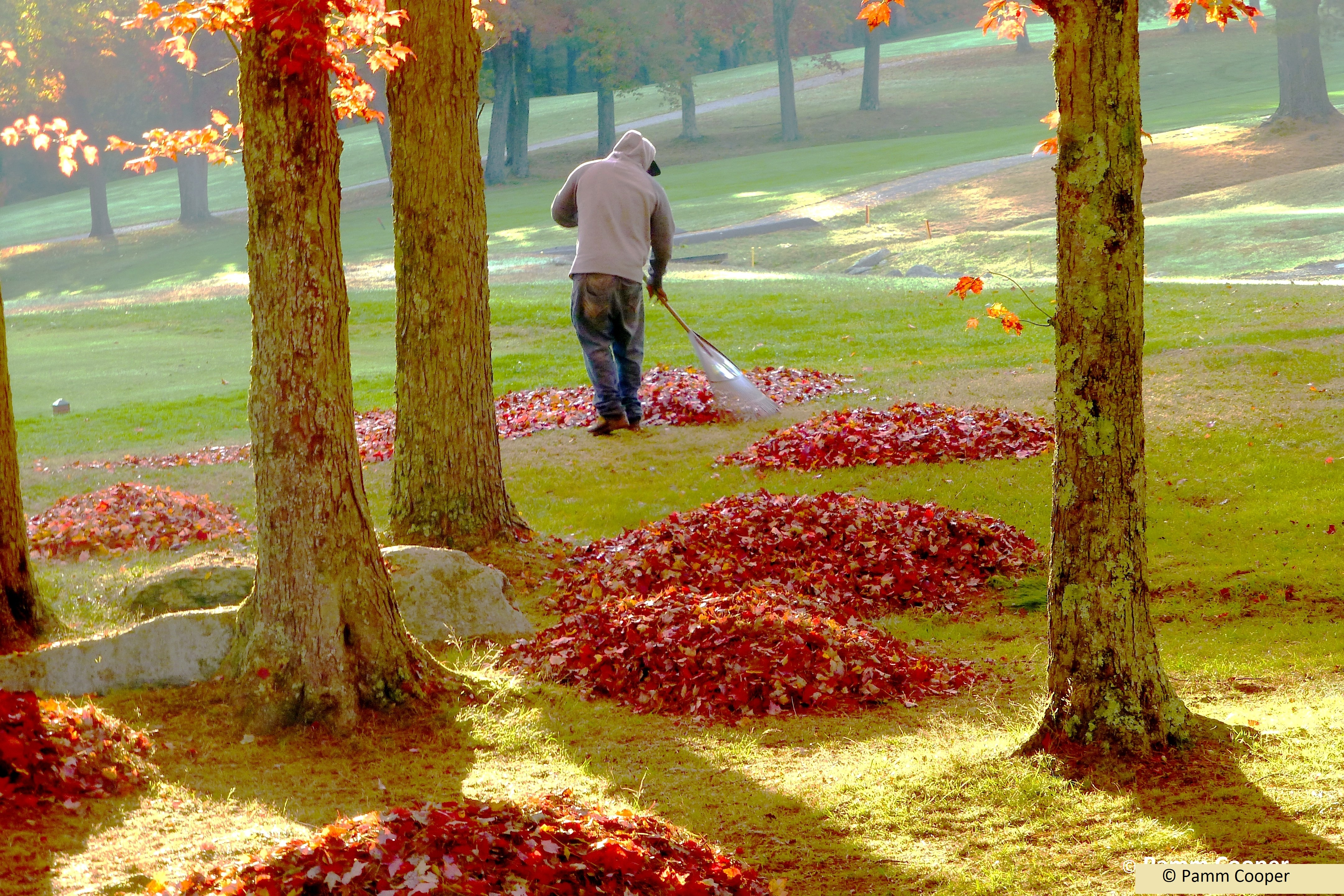 raking leaves abstract Pamm Cooper photo