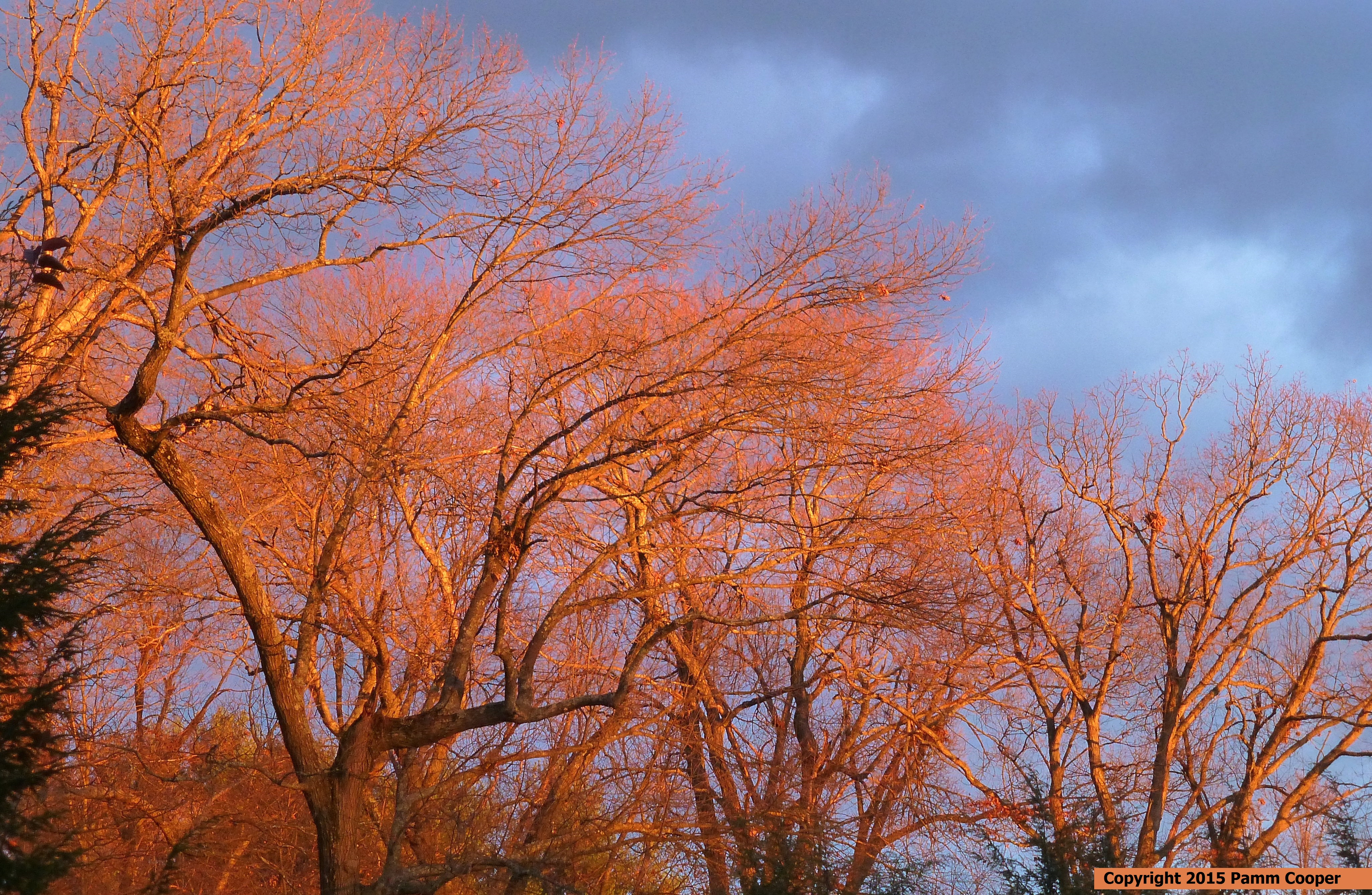 pre- sunset December glow 12-3-15