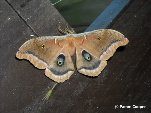 polyphemus just out