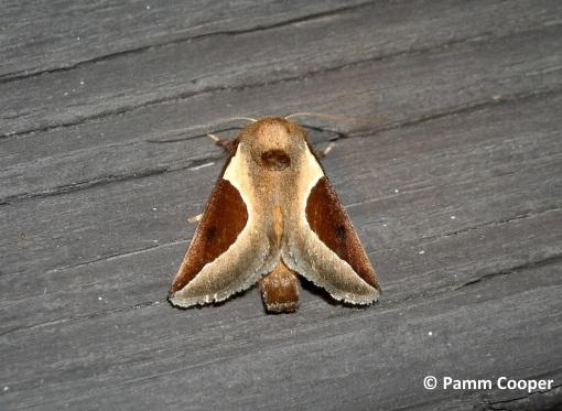 skiff moth back deck July 25, 2009
