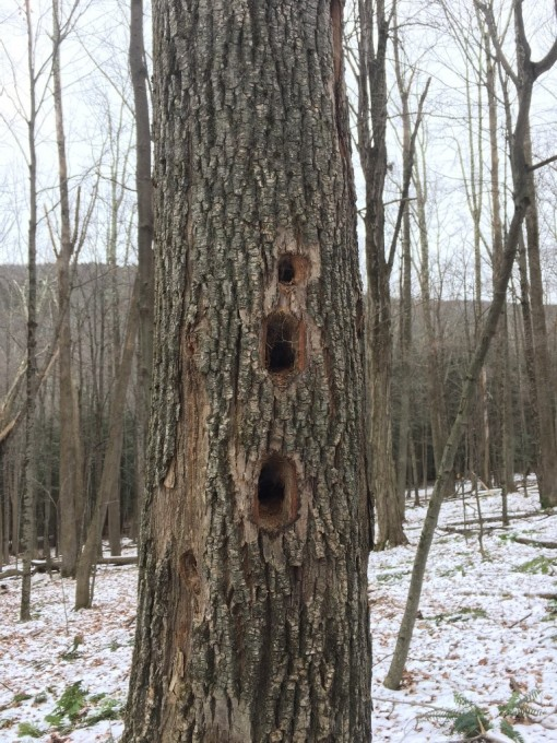 winter tree upright