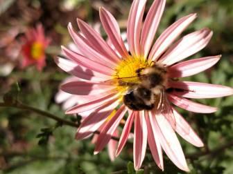 1 bee 1