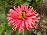 1 bee 2