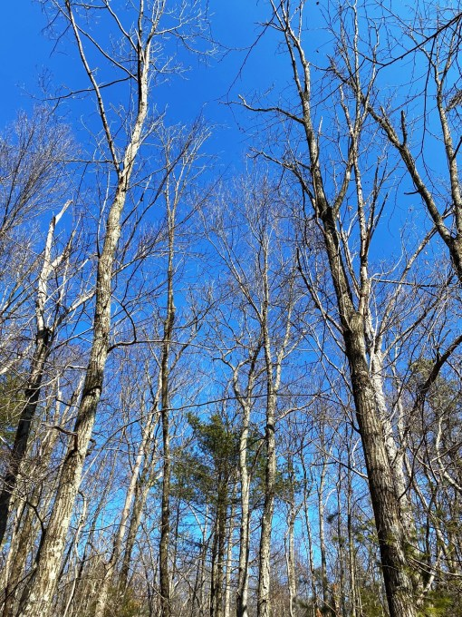blue skies and sunshine walk