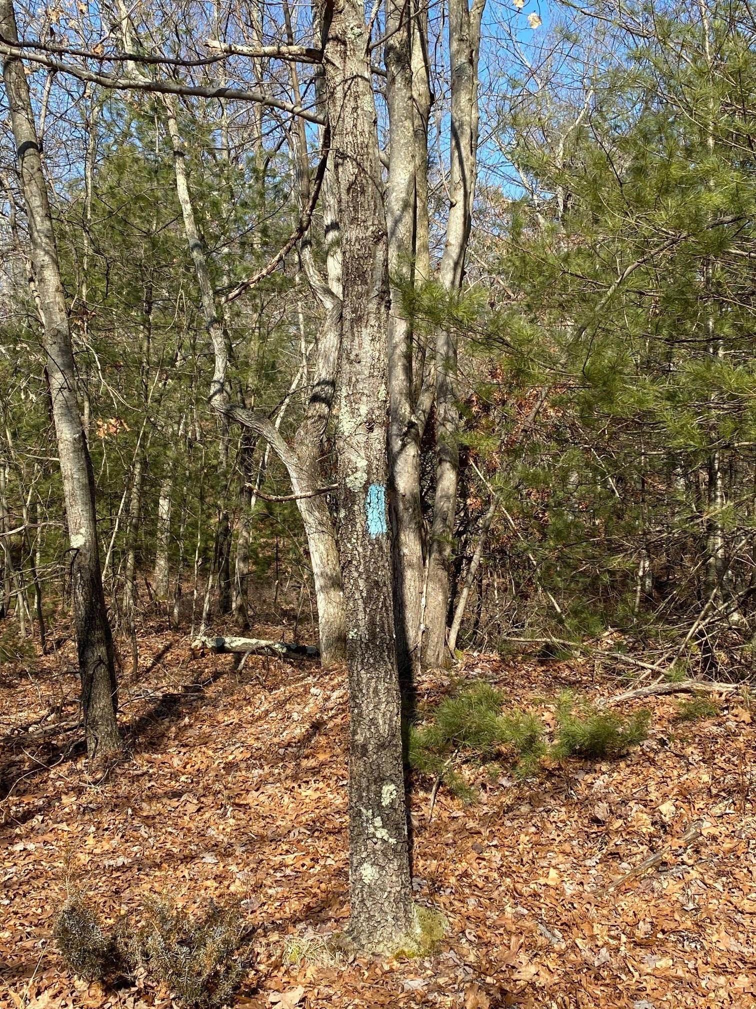 blue trail mark closer