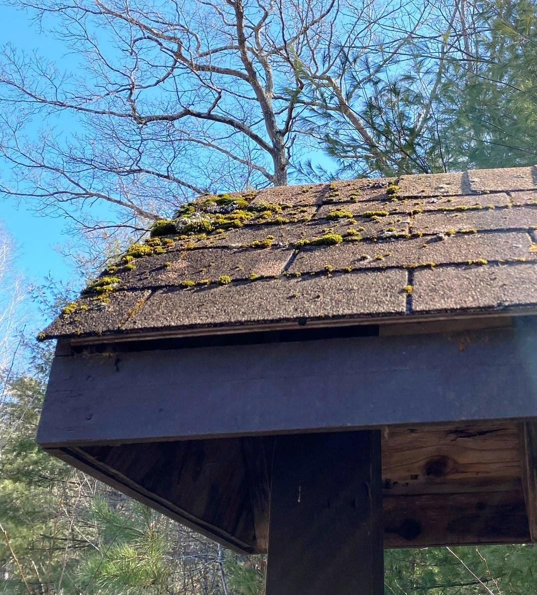 moss on roof feb2020
