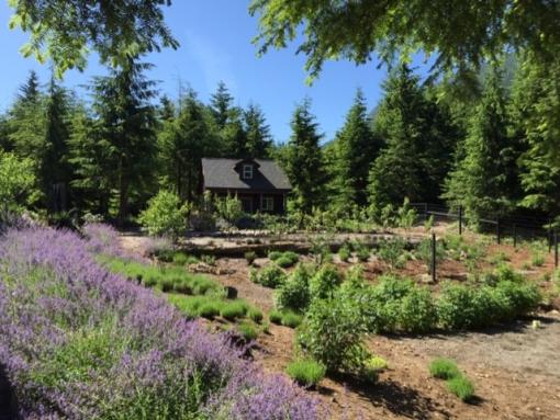lavender & garden shed L. Rivers
