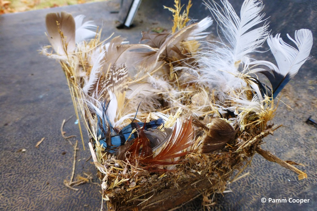 Bird's nest of unknown bird cleaned out of bluebird house has blue jay, hawk, goose and other feathers