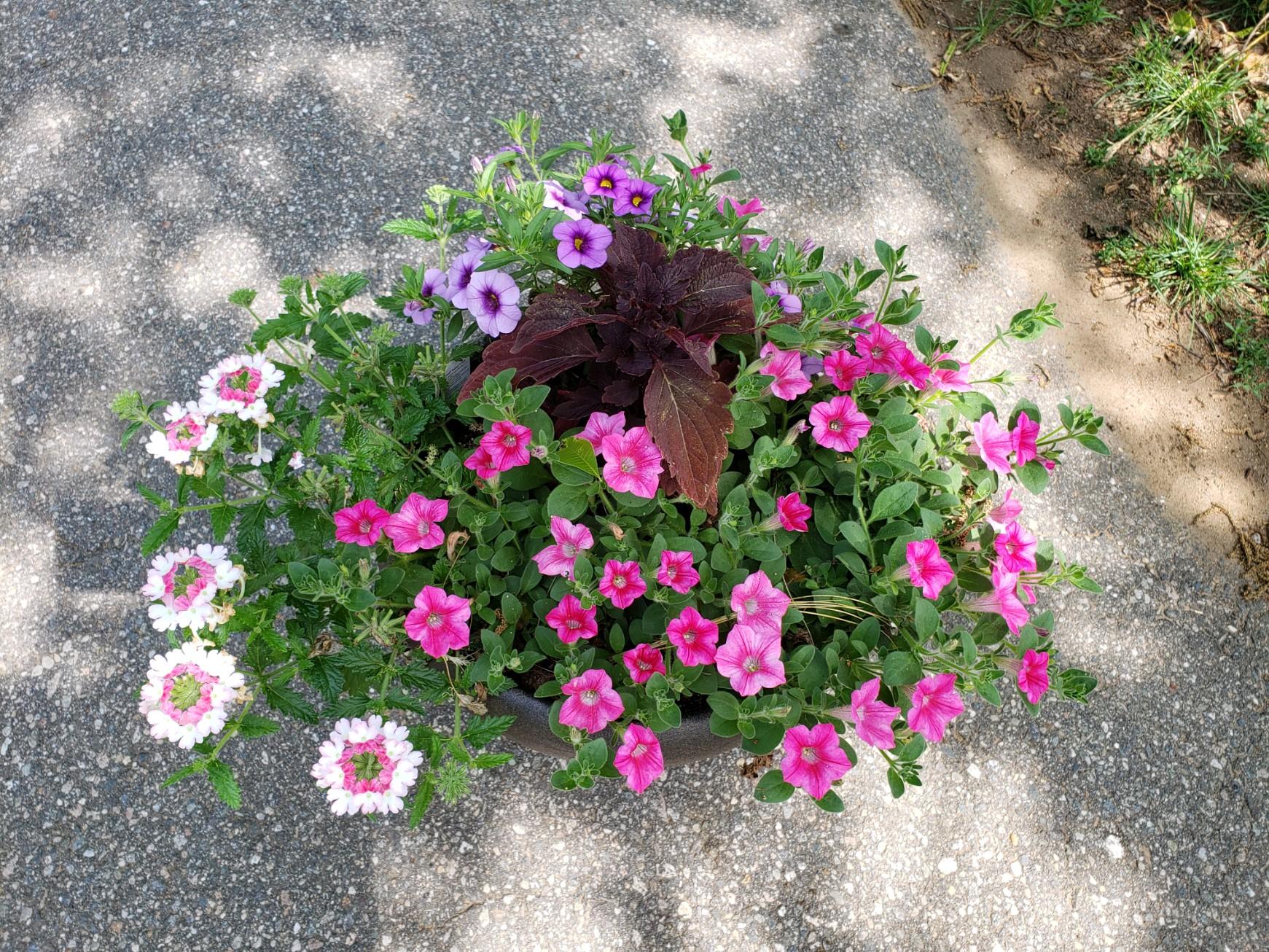 ML 6-21 Flower pot